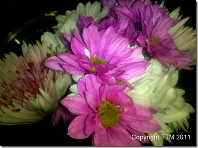 vday-flowers_thumb1