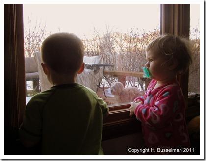 vday window