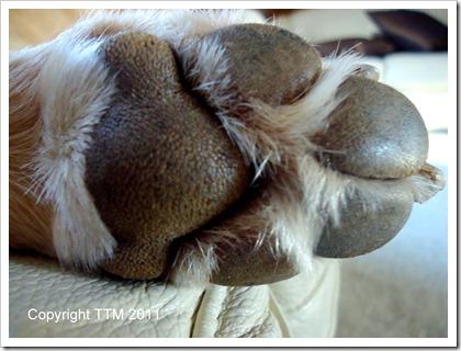 bodyparts paw