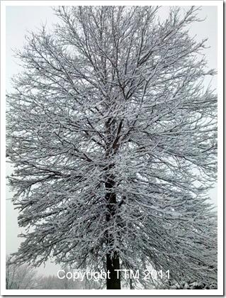 snow tree2