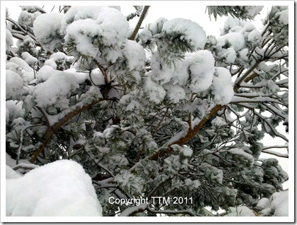 snow tree3