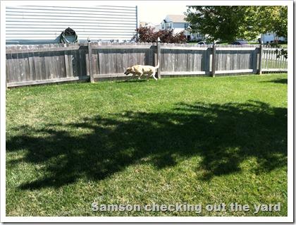 samson yard